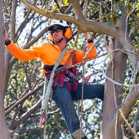 JAKE HEYMAN - OWNER - HEAD ARBORIST
